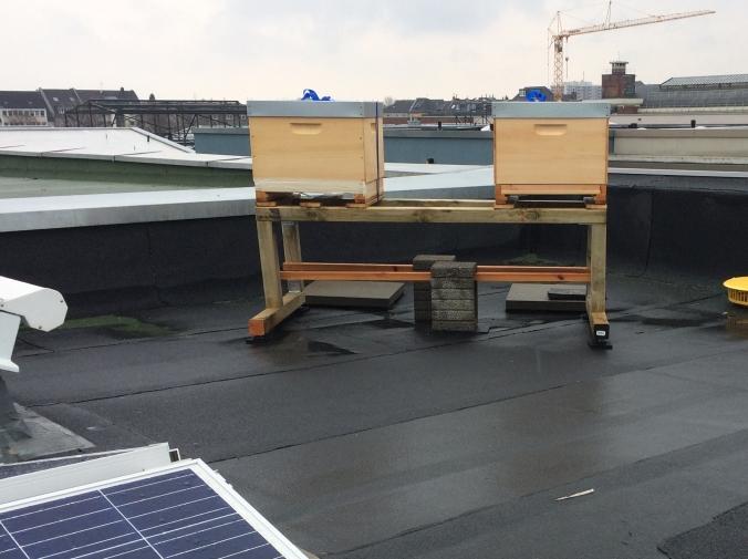 Der Bien auf unserem Dach
