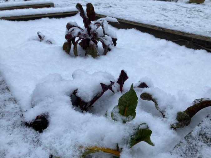 Gemüse-Hochbeet mit Schneebedeckung