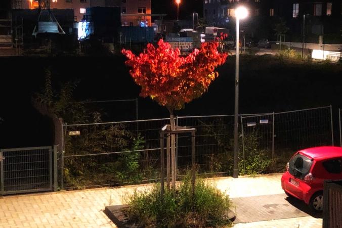 Rotbelaubter Baum